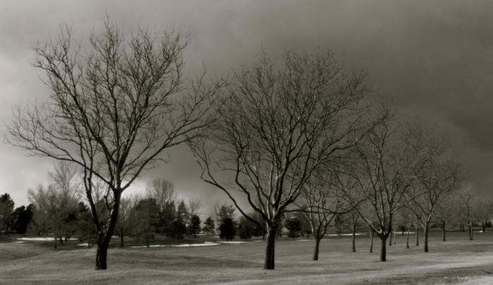 treesgolf course
