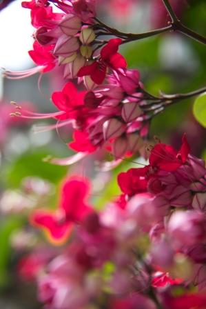 blue heaven flowers