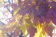tree fall 3