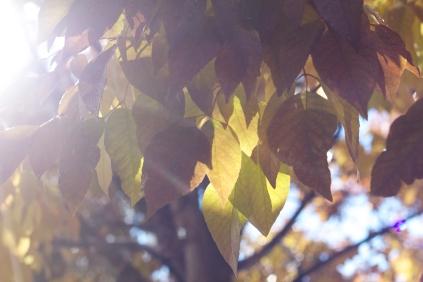 tree fall 4