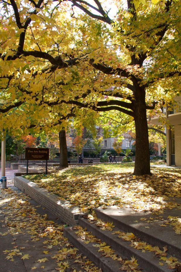 tree campus columbia