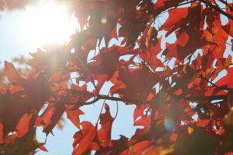 tree red columbia