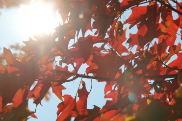 tree red columbia
